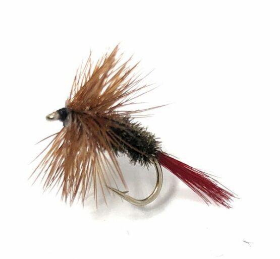 Brown Hackels Red